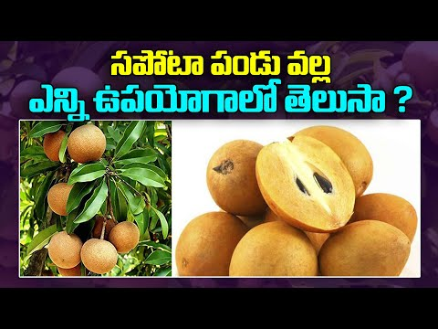 do-you-know-how-many-uses-of-sapota-fruit?- సపోటా-వల్ల-ఉపయోగాలు- health-benefits-of-sapota  #vtalktv
