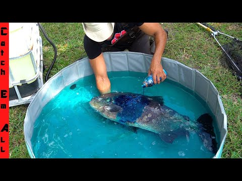 BLUE CHEMICAL WASH To SAVE INFECTED FISH **Treatment Works On All Fish**