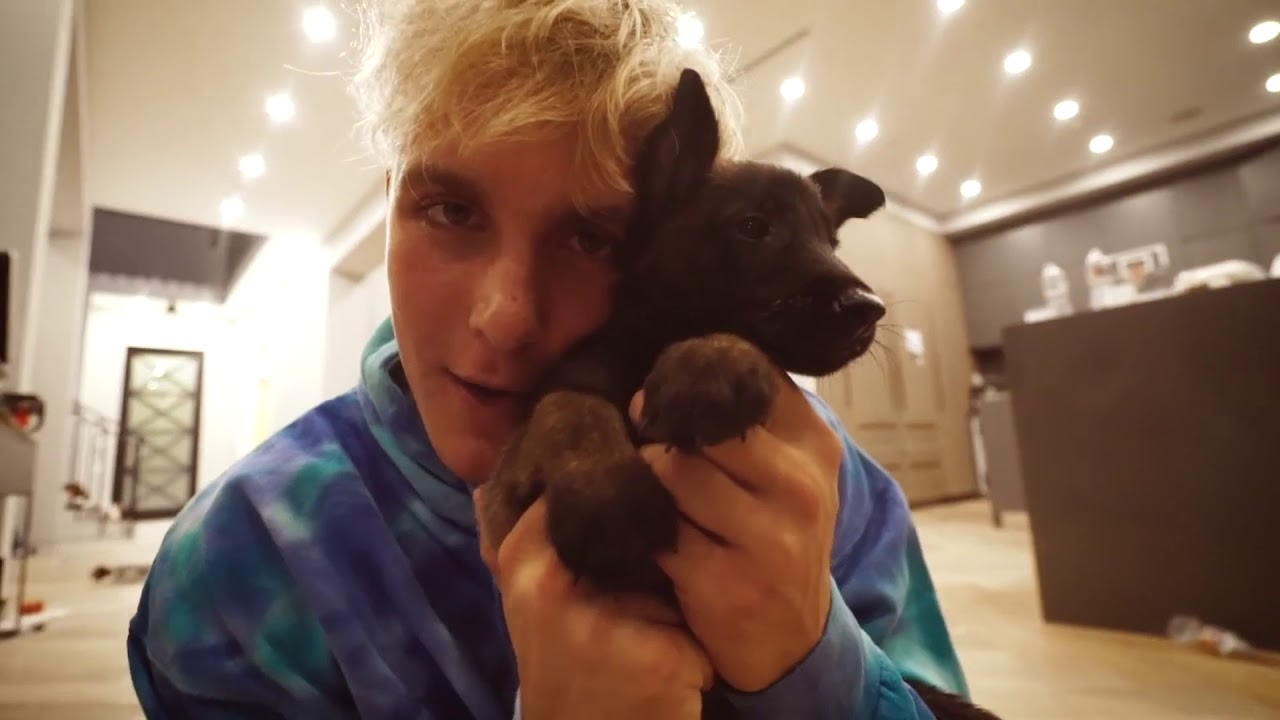 What Is The Breed Of Jake Paul S New Dog