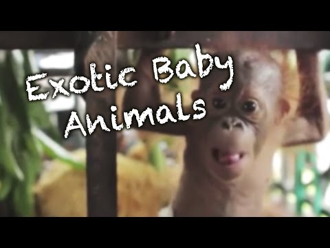 Exotic Baby Animal Compilation