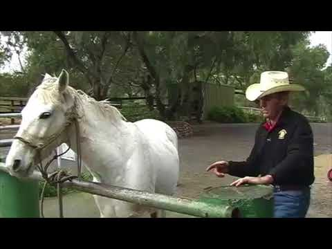Curing the Violent Pull back Horse