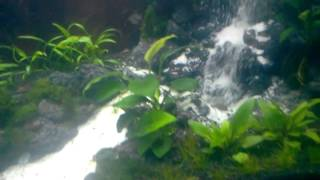 Repeat youtube video Aquascape Waterfall Jakarta @tile27