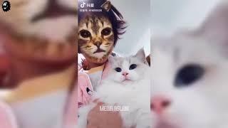 Tiktok Kedi Filtresi İle Kedi Trollemek | Komik Kedi Videosu 2019