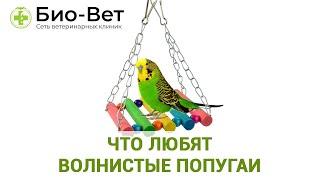 Что Любят Волнистые Попугаи & Еда, Игрушки Для Волнистых Попугаев