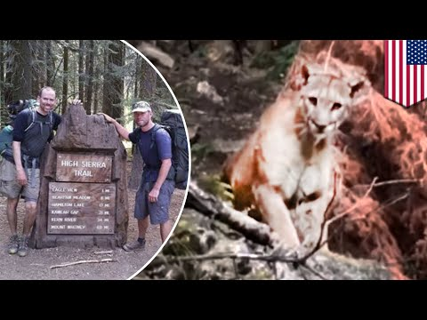 Mountain lion: Hikers record close encounter with large mountain lion - TomoNews