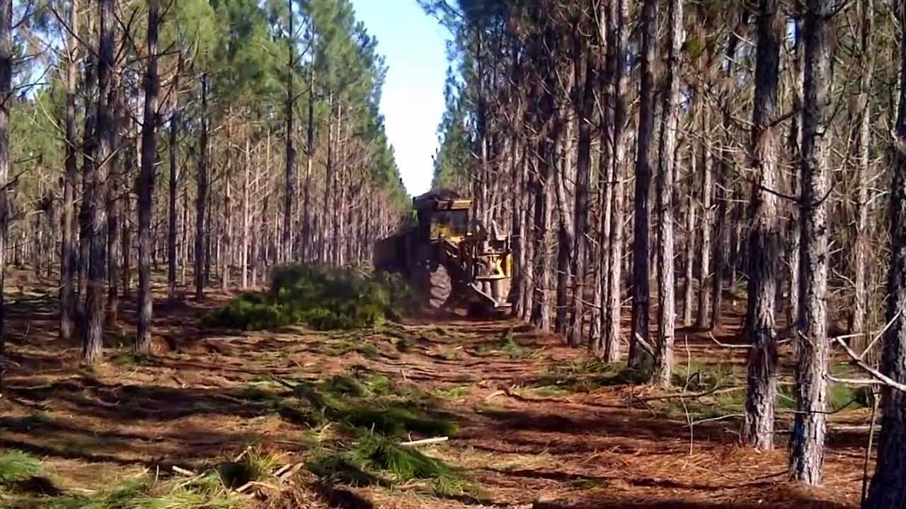 Planted Pine First Thinning Youtube