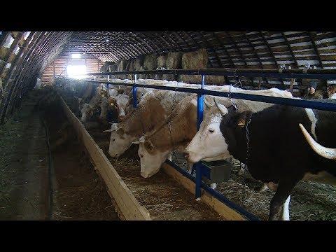 Все больше фермеров Волгоградской области развивают молочное животноводство
