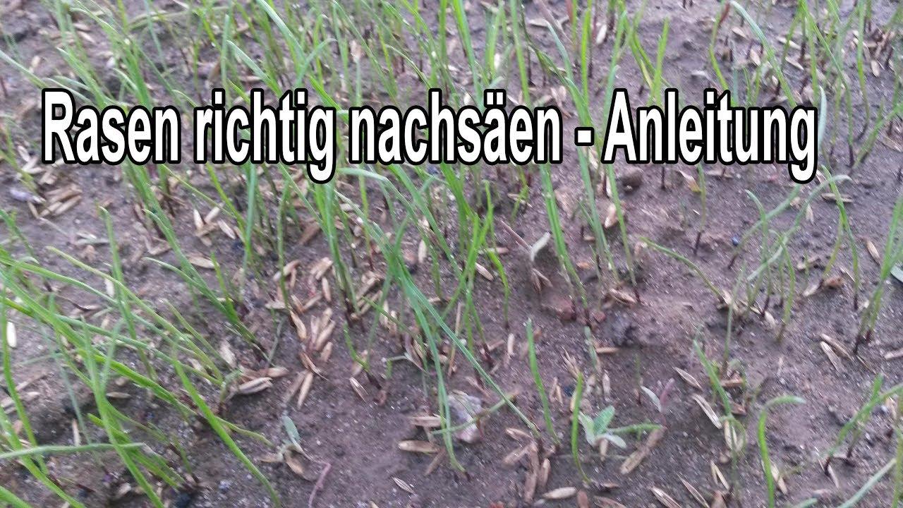 Rasen Vertrocknet 2021