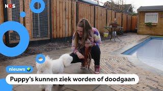Veel hondenverkopers gaan slecht met puppy's om