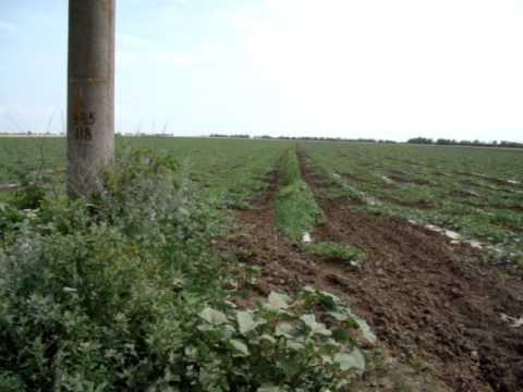 Помідорна катастрофа: фермери на Херсонщині зіштовхнулись з .