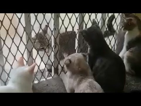 brave-cat-fighting-with-4-cats