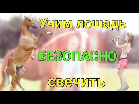 Вопрос: Как научить вашу лошадь ложиться?
