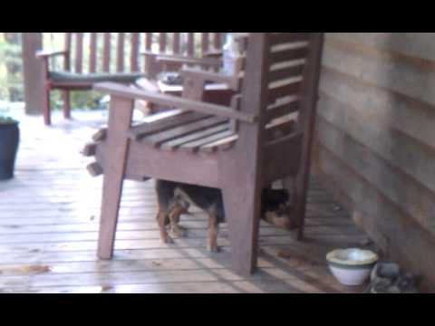 Dexter The Wonder Dog Scratching His Back.