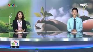 ĐỔI GIẤY LẤY CÂY   Việc tử tế   VTV1
