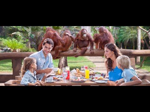 breakfast-with-orangutans-at-bali-zoo.