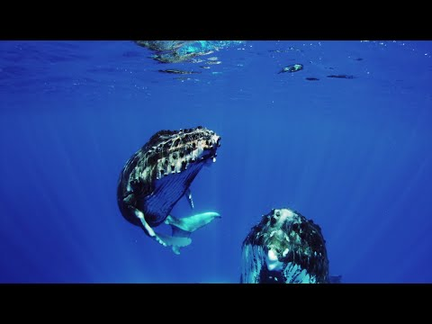 Video Of The Week | The Future of the Ocean Depends on You