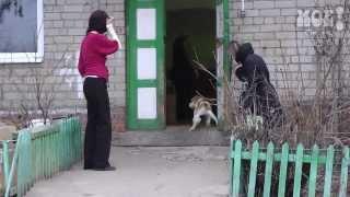 В Воронеже собаку облили кипятком