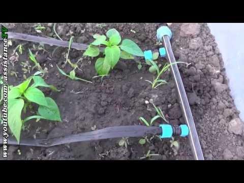 Капельный полив / Применение на огороде и в теплице