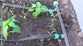 Капельный полив / Применение на огороде и в теплице(, 2014-05-13T20:17:44.000Z)