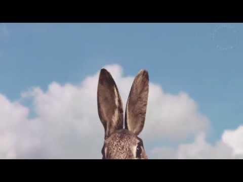 PLONK & REPLONK Lapin musical