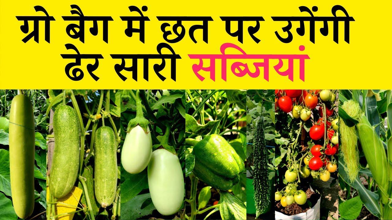 ग्रो बैग में छत पर उगेंगी ढेर सारी सब्जियां   How To Grow Vegetables In Grow Bags In Hindi