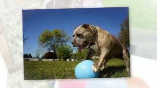 Bounce-n-Play™ by Jolly Pets®