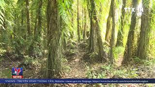 TPHCM và Nam Bộ có nguy cơ cháy rừng cao nhất