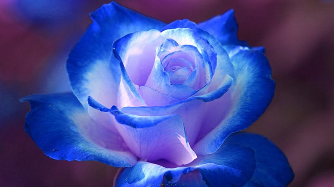 Beautiful flowers photos beautiful flowers 2019 beautiful flowers and can be downloaded and commercially used because they are licensed under the creative pictures of most beautiful flowers in the world blue flowers izmirmasajfo