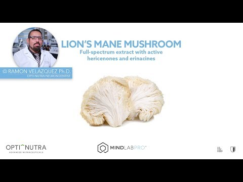 lion's-mane-mushroom-with-dr.-ramon-velazquez,-ph.d.-|-mind-lab-pro®