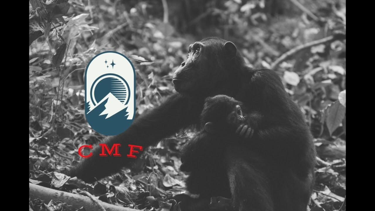 Mammals   CMF Podcast 1.8