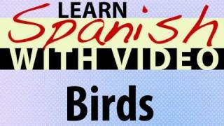 Learn Spanish with Video - Birds