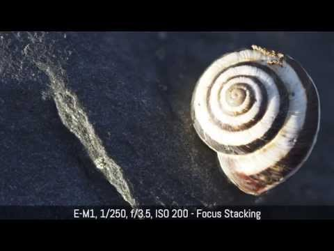 Olympus OM-D E-M1 - Firmware 4 (Focus Stacking, Focus Bracketing and more)