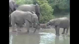 Słonie przy wodopoju Pete's Pond Afryka