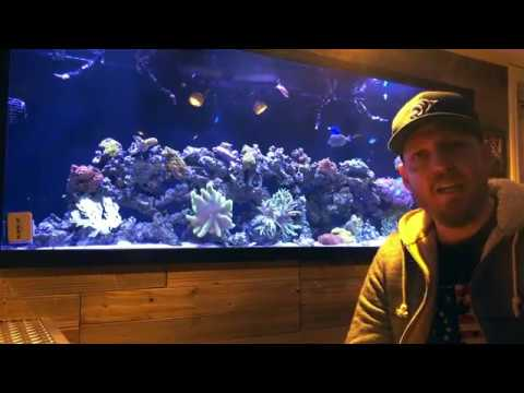 Introduction to Saltwater Ambitions - Custom Aquariums 2019-02-21 15:31