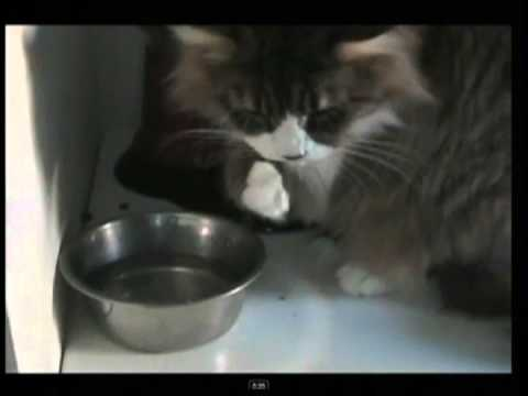 Pets That Drink Too Much Water: Cat Diabetes (2 Of 3)