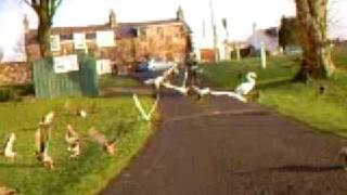 lochmabens birds 2