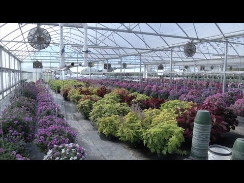 Plant Nursery Keeps Southeast Georgia Landscapes Beautiful