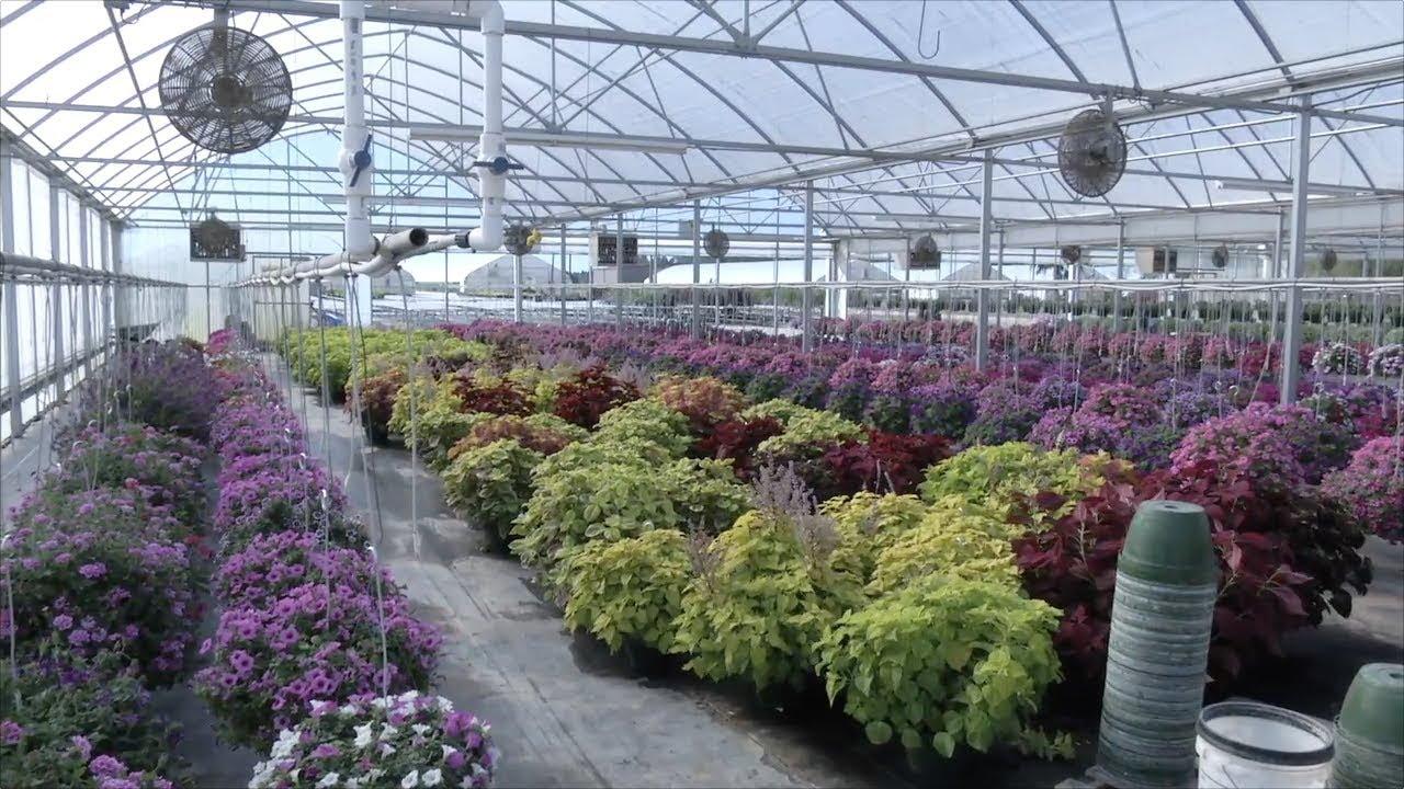 Plant Nursery Keeps Southeast Georgia Landscapes Beautiful