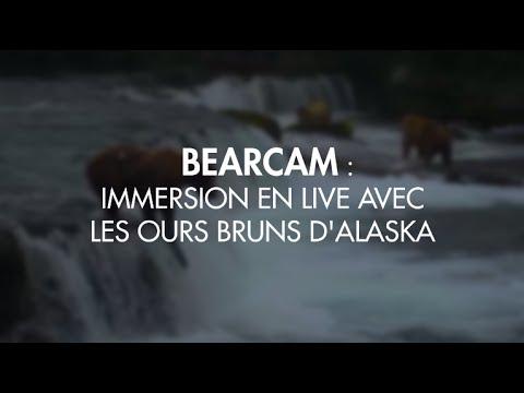 Plus besoin d'aller en Alaska pour observer les ours