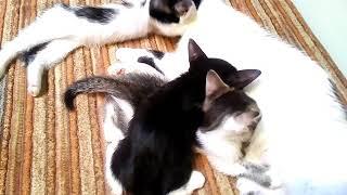 Отдадим котят в хорошие руки