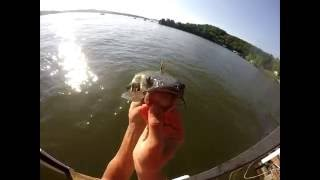 How to Catch Catfish with Shrimp - Catfishing Tips - Summer