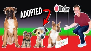 Tinder in Real Life..but for DOGS! * Part 2 *
