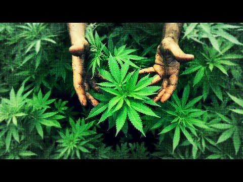 No Master, No Slave 003: Hemp:Cannabis, The Cure For The World