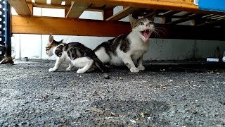 Kusan Yavru Kedi ve Beni Tehdit Eden Annesi
