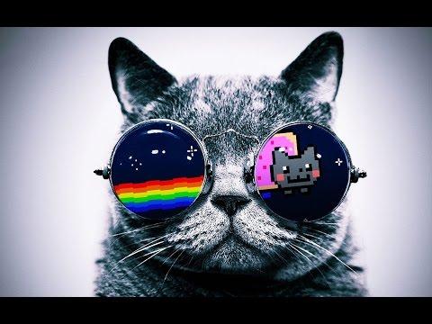 Tüm Zamanların En Çok İzlenen 10 Kedi Videosu