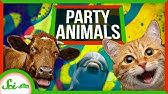 Do Wild Animals Intentionally Get High?
