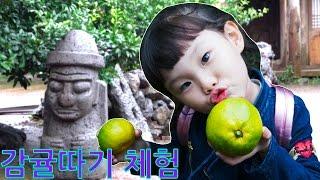 제주도 감귤농장 나비생태공원 체험 LimeTube & Toy 라임튜브