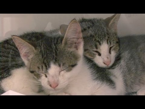 Shelter Cat Adoption Secrets