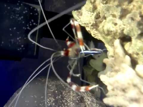 How To Frag- Coral Propagation: Tyree Undata, Purple Digi, Birds Nestиз YouTube · Длительность: 5 мин19 с