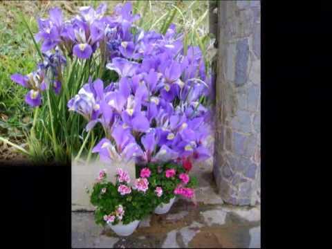 Άνθη από διάφορες περιοχές της Ελλάδας και από τη Μόσχα!